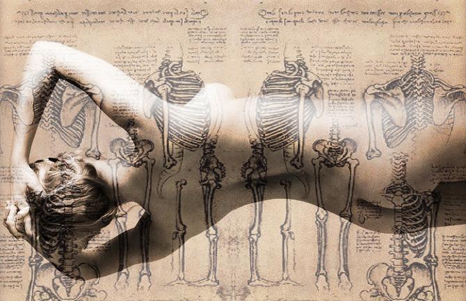 Bone Anatomy In Lyrics Feraisondetremme Personal Network